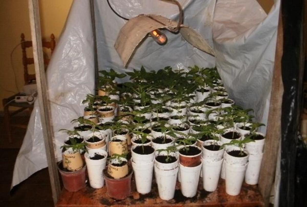 Εξαρθρώθηκαν δύο σπείρες που καλλιεργούσαν και εμπορεύονταν χασίς! 35 άτομα είναι «μπλεγμένα»!   Newsit.gr