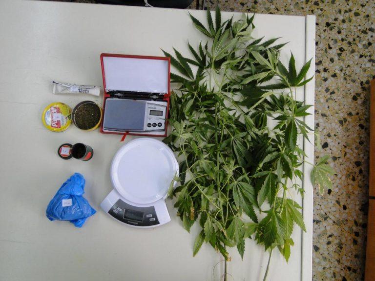 Καβάλα: Τα φυτά που είχε στο σπίτι έφεραν τις χειροπέδες – ΦΩΤΟ | Newsit.gr