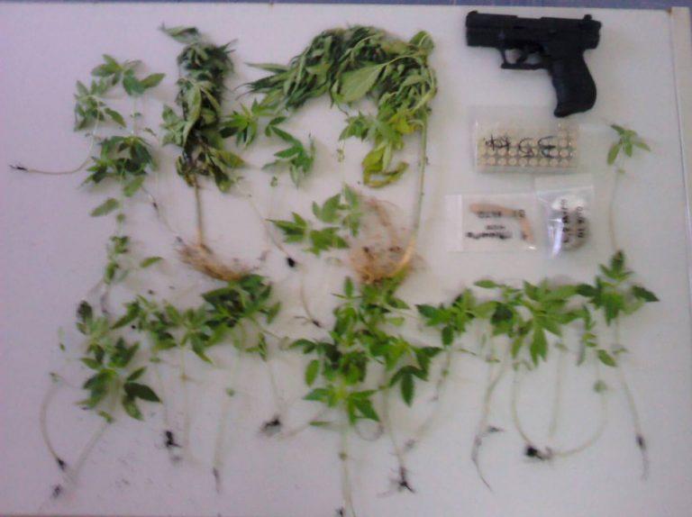 Ρόδος: Το χασίς οδήγησε σε όπλα, δενδρύλλια, μέχρι και προϊόντα μαϊμού | Newsit.gr