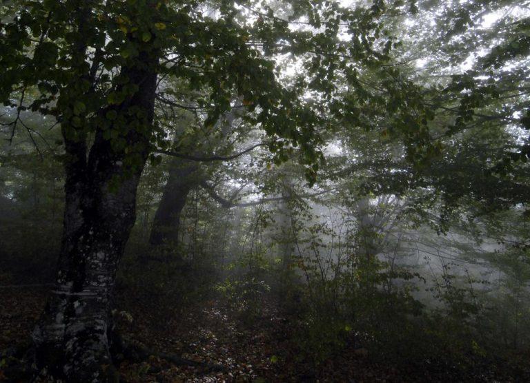 Βόλος: Στην ερημιά… κρυμμένα 11 κιλά χασίς   Newsit.gr