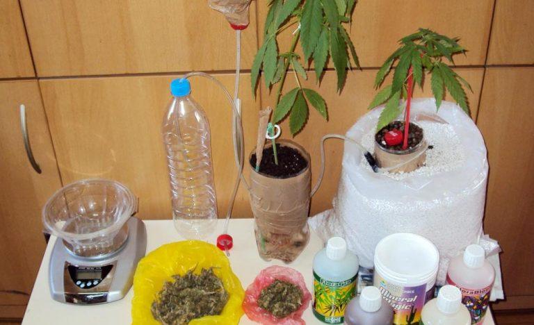 Ρέθυμνο: Καλλιεργούσαν χασίς στο σπίτι τους και βρέθηκαν με χειροπέδες | Newsit.gr