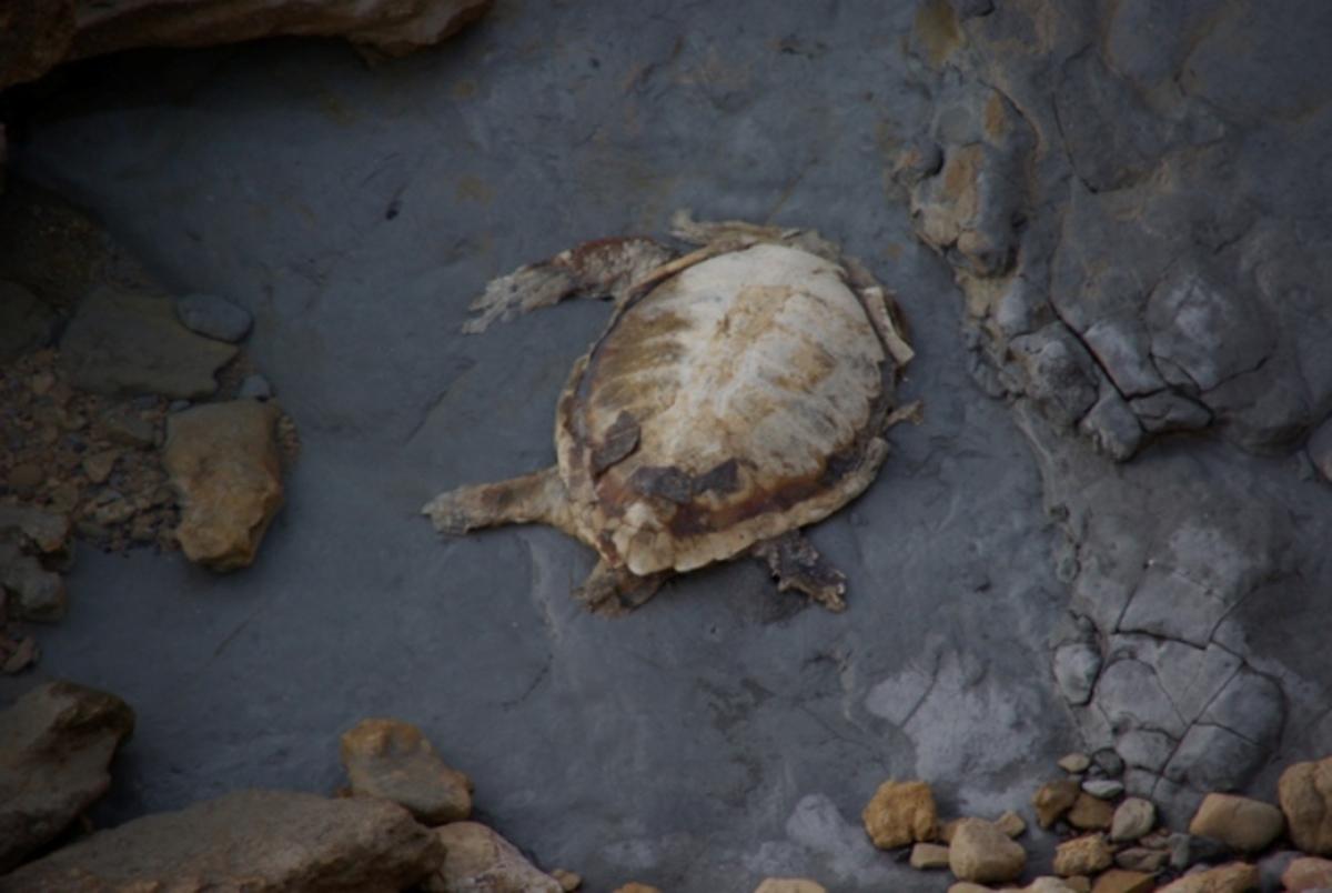 Περιβαλλοντικό έγκλημα στη Κρήτη: Αδίστακτοι σκότωσαν χελώνα και φώκιες   Newsit.gr