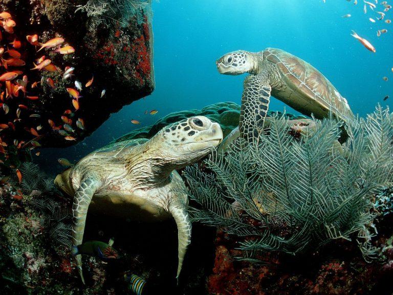 Ηλεία: Σκότωσαν 10 χελώνες και μια φώκια… | Newsit.gr