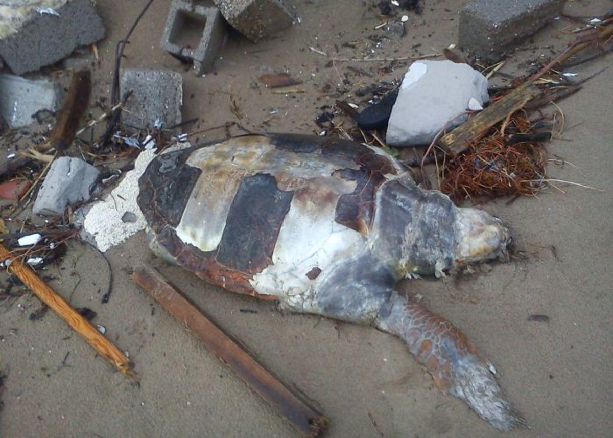 Νεκρή χελώνα στο λιμάνι του Ηρακλείου | Newsit.gr