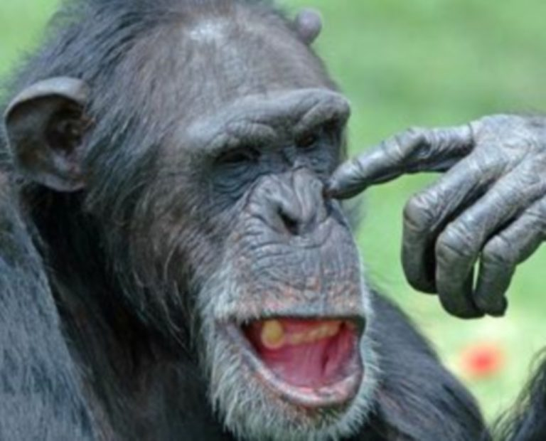 Οι χιμπατζίδες θρηνούν για το θάνατο των αγαπημένων τους | Newsit.gr