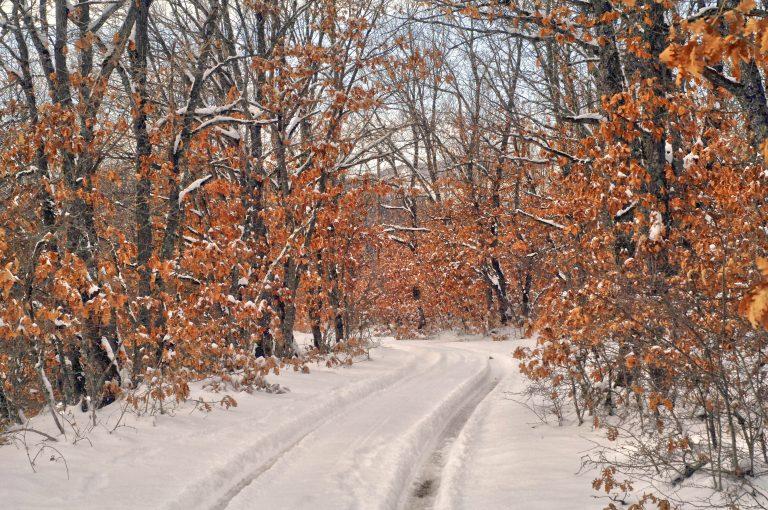 Φθιώτιδα: Χιόνια προς Μπράλο, Δομοκό και Καρπενήσι! | Newsit.gr