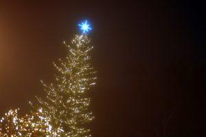 Αναλυτικές οδηγίες του υπ. Περιβάλλοντος για τα Χριστουγεννιάτικα έλατα