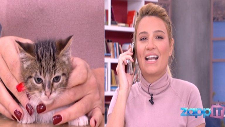 Πασίγνωστη παρουσιάστρια υιοθέτησε on air το γατάκι που κρατούσε η Φαίη | Newsit.gr
