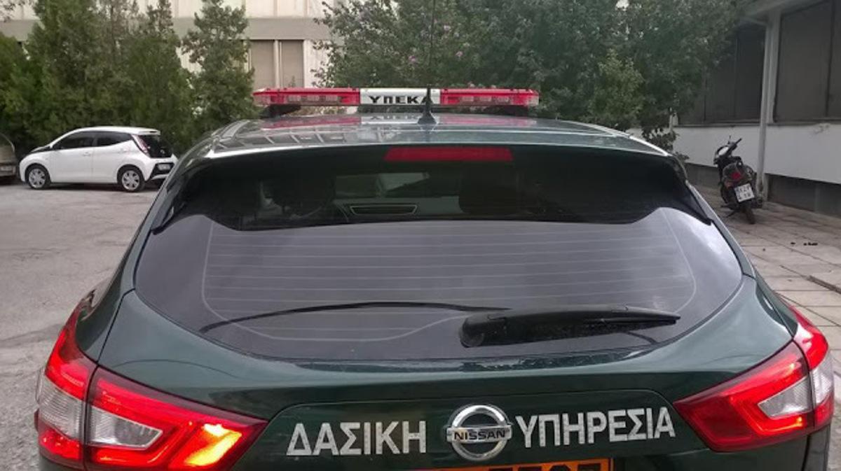 Διέσωσαν τραυματισμένο ζαρκάδι στην Ξάνθη [pics] | Newsit.gr