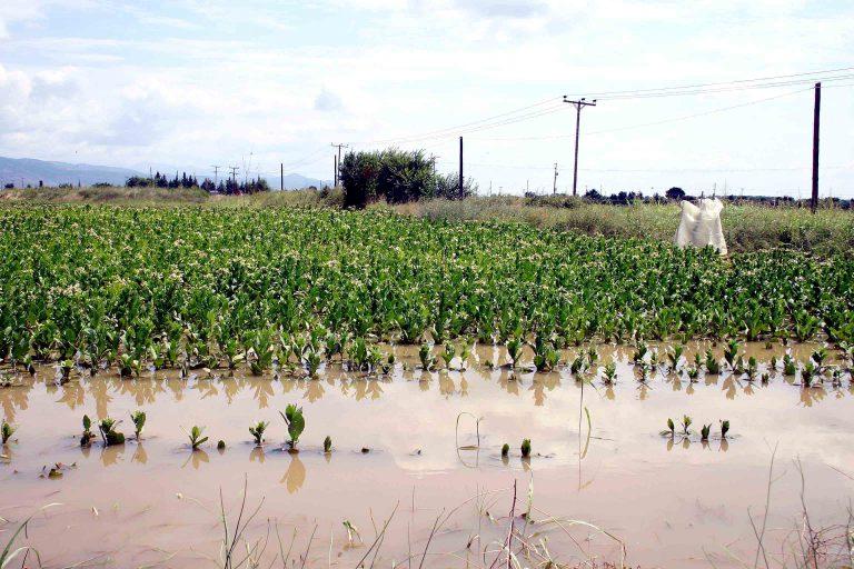 Ρέθυμνο: Ζημιές σε αγροτικές καλλιέργειες | Newsit.gr