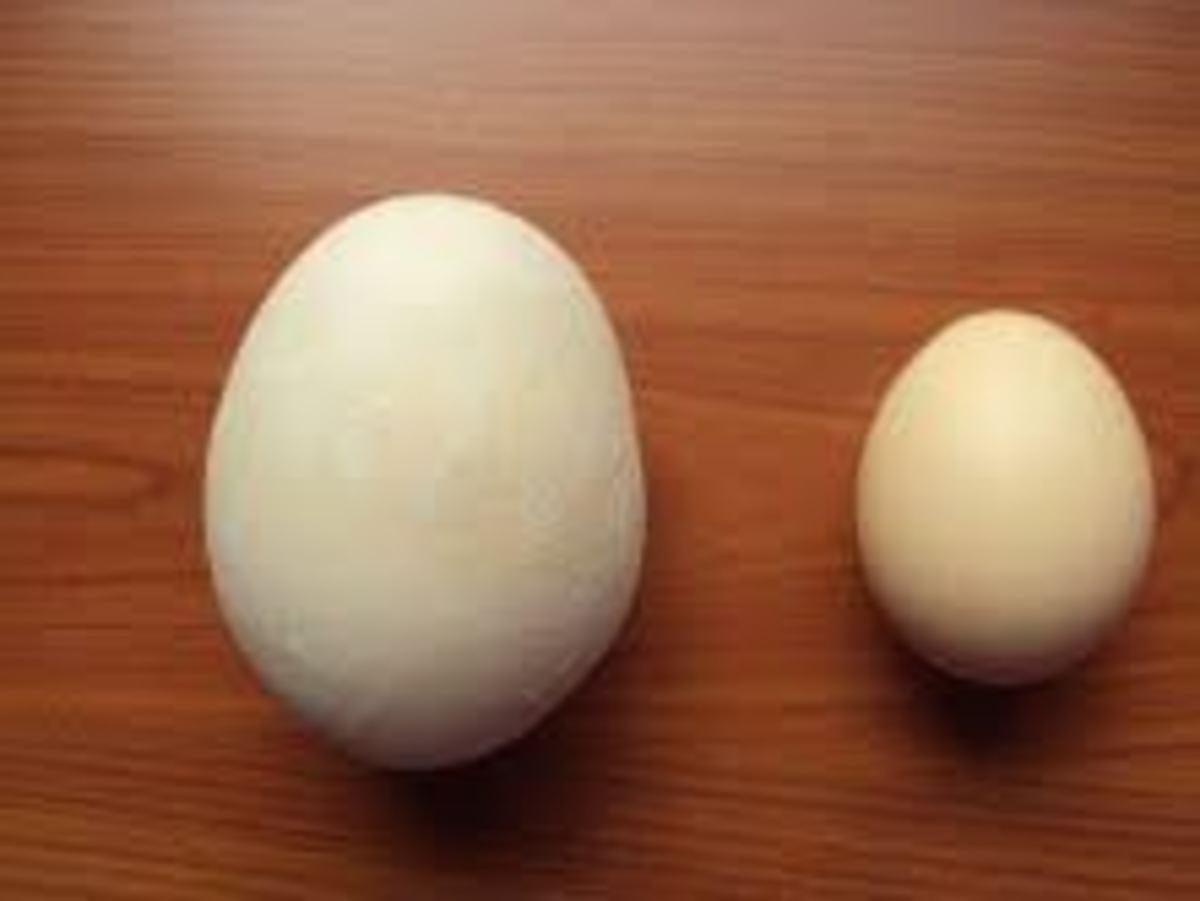 Κρήτη: Το γιγαντιαίο αυγό της στοίχισε τη ζωή… | Newsit.gr
