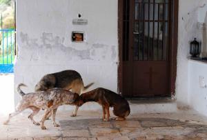 Λαμία: Άγρια επίθεση από αδέσποτα σκυλιά – Τον έριξαν και άρχισαν να τον δαγκώνουν [vid]