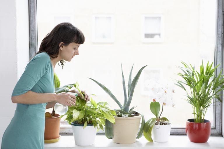 Καλύτερη ποιότητα αέρα μέσα στο σπίτι, αν έχετε αυτά τα φυτά εσωτερικού χώρου [pics] | Newsit.gr