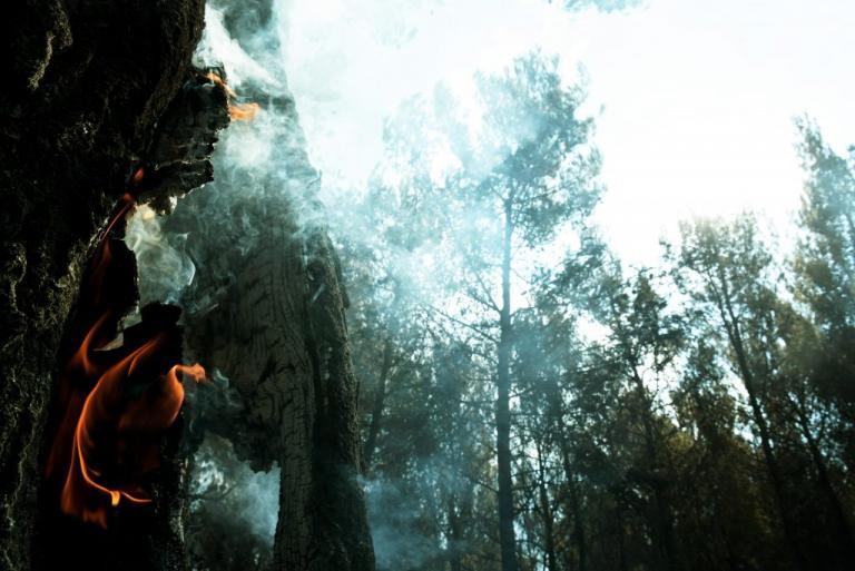 Φωτιά στην Αττική: Αποκαρδιωτικές εικόνες – «Μαύρισε» ο τόπος | Newsit.gr