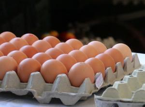 Μολυσμένα αυγά: Επιδρομές, κατασχέσεις και συλλήψεις!