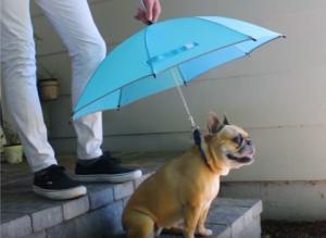 Ομπρέλα για τα σκυλιά! Το είδαμε και αυτό! [vid]