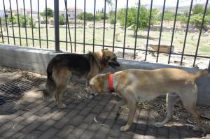 Ραφήνα: Σύλληψη 39χρονου για κακοποίηση σκύλου!