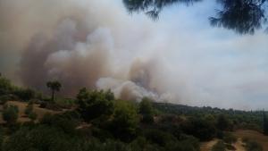 Μεγάλη φωτιά στην Αμαλιάδα – Εκκενώθηκε το χωριό Ανάληψη [vid]