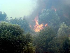 Φωτιά στην εθνική οδό Αθηνών – Κορίνθου
