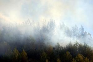 Σε εξέλιξη πυρκαγιά στον ορεινό όγκο της Ροδόπης