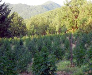 Κοζάνη: Πήγαιναν να ποτίσουν τη… φυτεία και βρέθηκαν με χειροπέδες