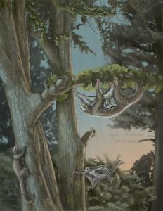 Βρέθηκαν τα αρχαιότερα θηλαστικά – αιωροπτεριστές! Ζούσαν πριν από 160 εκατομμύρια χρόνια