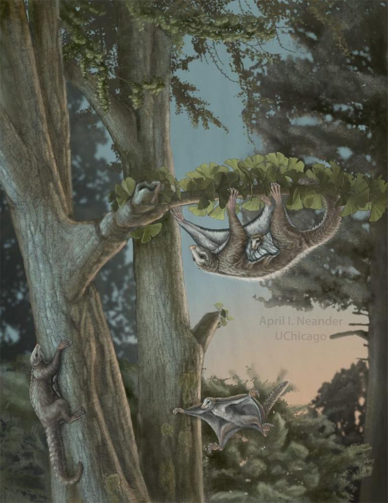 Βρέθηκαν τα αρχαιότερα θηλαστικά – αιωροπτεριστές! Ζούσαν πριν από 160 εκατομμύρια χρόνια   Newsit.gr