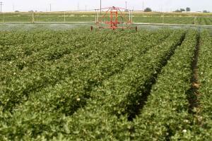 Με 148 εκατομμύρια ευρώ ενισχύονται οι νέοι αγρότες