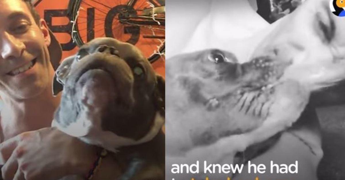 Κανείς δεν ήθελε να υιοθετήσει το σκυλάκι με νανισμό μέχρι που έγινε το θαύμα!