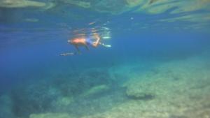 Νεκρός ψαροντουφεκάς στη Χαλκιδική! Τον χτύπησε ταχύπλοο και πέθανε από αιμορραγία