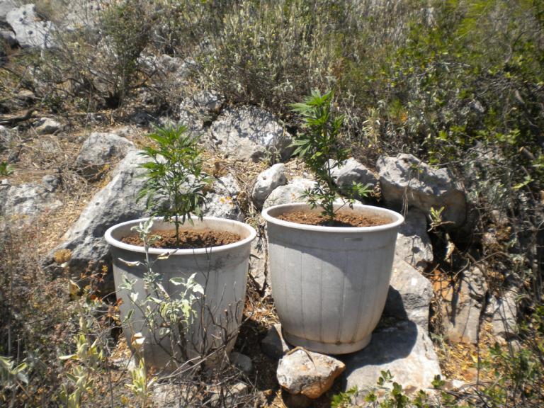 Κρήτη: Παπάς με… φούντες! Βρέθηκαν δενδρύλλια στο σπίτι του | Newsit.gr