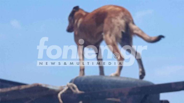 Κρήτη: Πού φαντάζεστε ότι βρίσκεται αυτός ο σκύλος; Η απίθανη συνέχεια που σαρώνει το facebook [pics] | Newsit.gr
