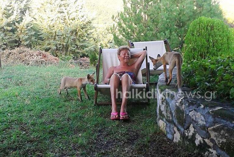 Χαλκιδική: Τα αλεπουδάκια ξεθάρεψαν – Οι φωτογραφίες που σαρώνουν τα social media [pics]   Newsit.gr
