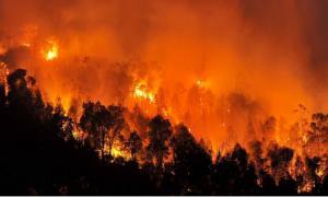 Κόλαση» στην Αλγερία: 100 πυρκαγιές σε 48 ώρες κατέκαψαν σχεδόν 11.000 στρέμματα δασική έκτασης