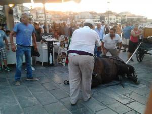 Χανιά: «Το άλογο δεν κατέρρευσε» – Διαψεύδουν το περιστατικό οι αμαξάδες