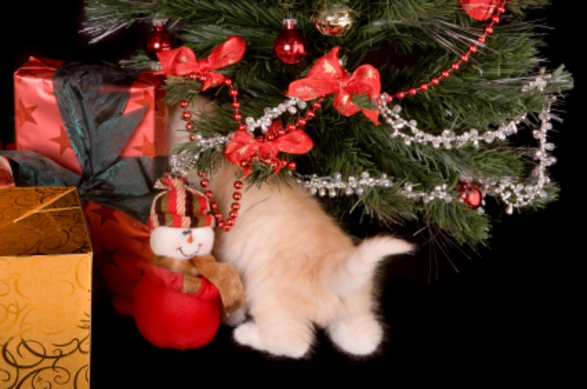 Κόλπα για να αποφύγετε τις Χριστουγεννιάτικες παρεξηγήσεις! | Newsit.gr