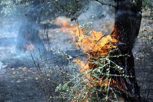 Θήβα: Διακοπή κυκλοφορίας λόγω αυξημένου κινδύνου πυρκαγιάς