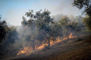 Αναζωπύρωση της φωτιάς στην Ηλεία – Κινδυνεύουν τρία χωριά