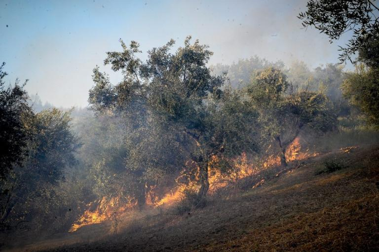 Φωτιά κοντά στην Πάτρα | Newsit.gr