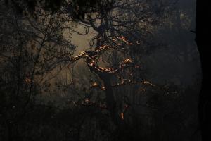Ολονύχτια μάχη με τις «φλεγόμενες βάτους» στο Σουφλί