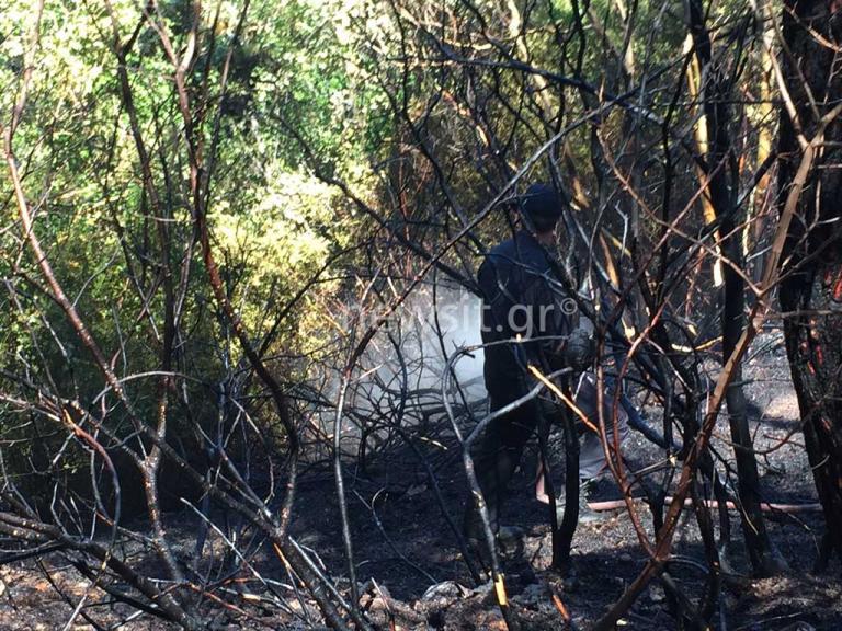 Μεγάλη φωτιά στο Κρυονέρι – Διακοπή κυκλοφορίας σε πολλούς δρόμους