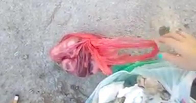 9ebcedc27e56 Χίος  Πέταξε 4 γατάκια ζωντανά στα σκουπίδια – Το βίντεο που προκαλεί  αντιδράσεις