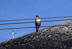 Ξάνθη: Όλη η πόλη χωρίς ρεύμα εξαιτίας ενός… πουλιού!