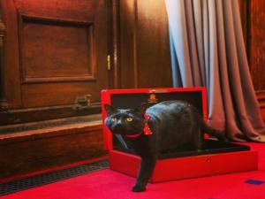"""Γλάδστων: Ο γάτος που """"εξολοθρεύει"""" τα ποντίκια του υπουργείου Οικονομικών! [pics]"""