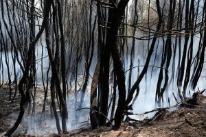 Φωτιά στην Αττική: Τίποτα δεν θα είναι όπως παλιά! Σε 30 χρόνια και βλέπουμε!