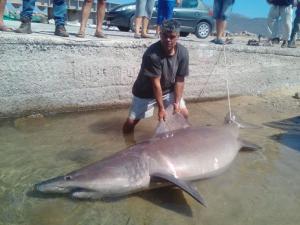Έβγαλαν καρχαρία στα Χανιά [pics]