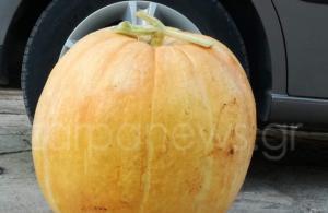 Χανιά: Βρήκε κολοκύθα… 42 κιλών! [pics]