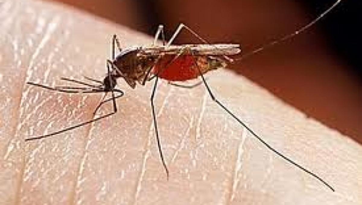 Δεύτερος νεκρός από τον ιό του Δυτικού Νείλου! Συναγερμός σε όλη τη χώρα   Newsit.gr