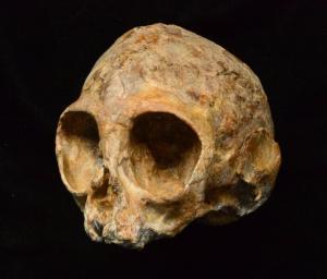 Σπουδαία ανακάλυψη! Βρέθηκε κοινός πρόγονος ανθρώπων και πιθήκων ηλικίας 13 εκατομμυρίων ετών!