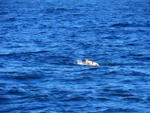 Χίος: Μετανάστης προσπάθησε να φύγει… κολυμπώντας